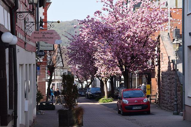 hofheim in rosa