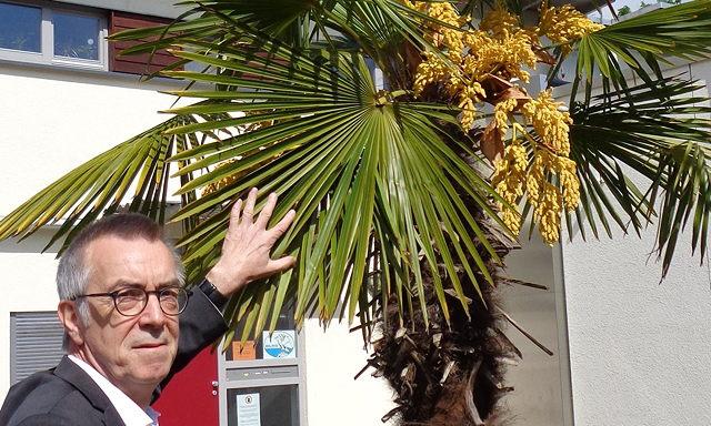 20200507 palmen