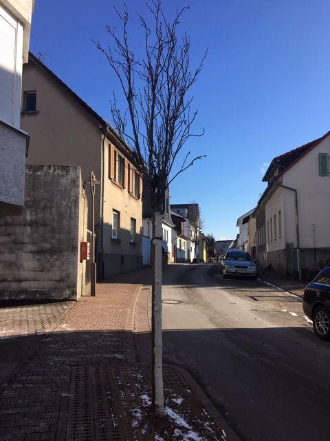 20210218 Stadtbaum