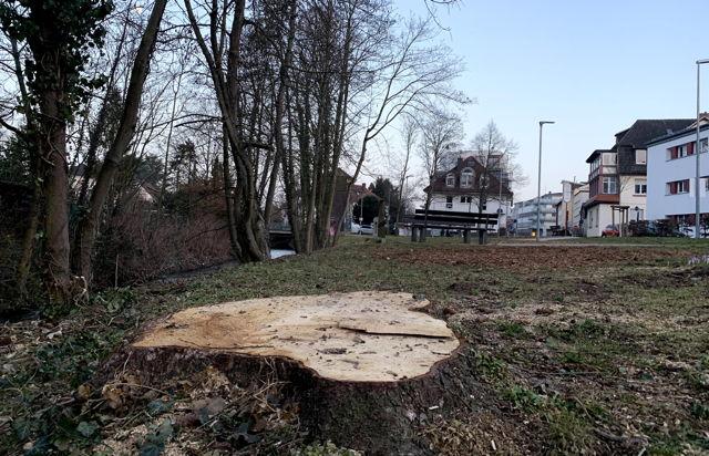 20210225 Baum wilhelmstrasse